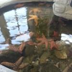 Some starfish in the aquarium